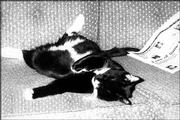 Felix the cat relaxes after reading the newspaper. Felix belongs to Vickie Sims, Lawrence.