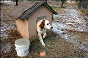 Rusty, who lives with his owner, Sam Hall, in North Lawrence, has a cozy dog house to keep him warm in the winter. Rusty's house is lined with straw to help keep out the cold.