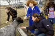 At Maggie's Farm north of Lawrence, Christina Mann, 10, of McLouth, and Samantha Brinkmann, 6; Liseth Galloway, 11; and Sara Galloway, 6, all of Lawrence, feed one of Barbara and Dave Clarks' sheep after its haircut Saturday. The wool from the sheep is then sold by the Clarks at the Lawrence Farmers Market.
