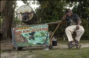 "A Jamaican sets up his roadside barbecue stand in the late afternoon to be ready for evening sales. On the Caribbean island, such stands are popular, and most specialize in jerk chicken, though some have fare as varied as lobster pizza, oxtails, curry goat or jerked pork.<br> <a href= ""http://etc.lawrence.com/galleries/jerkcooking/8435_lores.html"" target=""_new"" onclick= ""window.open(&squot;http://etc.lawrence.com/galleries/jerkcooking/8435_lores.html&squot;,&squot;Photo&squot;,&squot;height=650,width=550,screenX=10,screenY=10,&squot; + &squot;scrollbars,resizable&squot;); return false;""> <img src=""http://www.ljworld.com/art/icons/icon_photo.gif"" border= ""0"" alt=""photo""> Photo Gallery: Island spice</a><br>"
