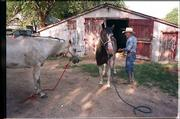 "Dan Matile, while in his late 70s, tends to two of his quarterhorses at his ranch near Elmdale.<br> <a href= ""http://etc.lawrence.com/galleries/DanMatile/8531_lores.html"" target=""_new"" onclick= ""window.open(&squot;http://etc.lawrence.com/galleries/DanMatile/8531_lores.html&squot;,&squot;Photo&squot;,&squot;height=650,width=550,screenX=10,screenY=10,&squot; + &squot;scrollbars,resizable&squot;); return false;""> <img src=""http://www.ljworld.com/art/icons/icon_photo.gif"" border= ""0"" alt=""photo""> Photo Gallery: Cowboy Dan Matile</a><br>"