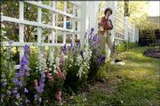 Mary Alice White, Eudora Welty's niece, walks past a floral bed of Imperial Mix larkspur as she enters the newly reconstructed rose garden at the Jackson, Miss., home of Welty, a Pulitzer Prize-winning writer. The restored garden of the Welty House opened last April.