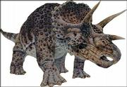 "Triceratops, meaning ""three-horned face,"" lived in the late Cretaceous Period, about 65 million years ago. It could grow to 28 feet long and 8 feet tall and weigh as much as 7 tons."
