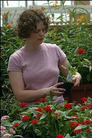 Sarah Schmidt, program assistant at the Monarch Watch program, works with some of the flowers that will be available Saturday as part of the Monarch Watch fund-raiser at Foley Hall on KU's west campus.