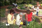 From left, Judy Koehler, Lorena Meyers and Leann Johnson take in the aroma of chocolate mint at the Audio-Reader sensory garden, 1120 W. 11th St., at Kansas University. The garden, which contains plants that smell good, feel good and emit sounds when the breezes blow through, is maintained by two Lawrence garden clubs.