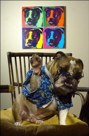 Underneath a portrait of himself, Heinz, a 3-year-old bulldog, waves to the camera while seated on his chair in his bedroom. Heinz enjoys fine steak meals and chilling in his pad.