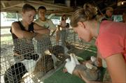 From left, Megan Barber, 15, of Lecompton, and Randy Petersilie, 15, of Garnett, watch Sara Michand, of Lawrence, judge rabbits during the Vinland Fair. Rabbits, pigeons and poultry were judged Thursday at the fair. Events begin at 10 a.m. today.