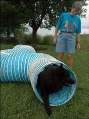 Barb Clauson, a dog trainer with the Lawrence Kennel Club, runs her 7-year-old Belgian Sheepdog, Konza, through an agility tunnel at her home.