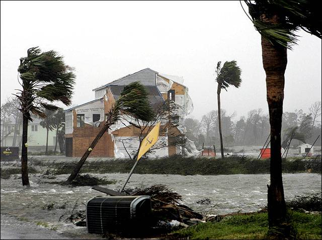 Photo Palm Trees Are Bent From The Force Of Hurricane Ljworld Com