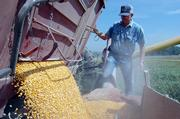 Mark Milleret processes some of this year's corn harvest  last week. Ethanol, which is partially derived from corn, is an alternative form of fuel added to gasoline.