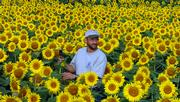 Ted Grinter, who lives near Reno, between Lawrence and Tonganoxie, stands in his 25 acres of sunflowers that he grows every year. The crop reached its peak on Sunday and will last only a few days. Several people stopped by Monday after Grinter placed a sign on U.S. Highway 24-40.