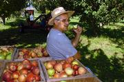 David Vertacnik enjoys an apple as he rests while picking.