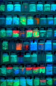 Jars of Tracy Hicks' faux preserved species give off an otherworldly glow under black light.
