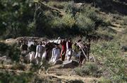 Kashmiri men carry two injured survivors from Khira Kal village to Butnar village in a mountainous area of the Neelum valley in northern Pakistan. New casualty figures from the South Asian earthquake have pushed the death toll to more than 79,000, regional officials said Wednesday.