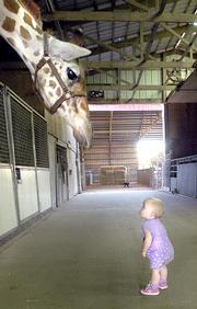 Dave Hale's granddaughter, Haylee Hale, 11 months and just learning to walk, holds her self steady to look up at her grandfather's giraffe. Dave Hale owns about 100 camels, more than 300 deer, 20 donkeys, cattle, sheep, a zebra and one giraffe on 120 acres just outside Cape Girardeau, Mo.