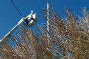 A Westar employee works on a line at 23rd and Massachusetts streets, where one of the city's many ornamental grasses is shown in the foreground.