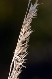 A detail of grass at 23rd and Massachusetts streets is shown above.