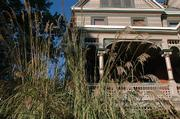 A large stand of ornamental grass gleams in the morning light while accenting the front porch at the home of Burdett Loomis, at Seventh and Louisiana streets. Ornamental grasses provide year-round interest in gardens and are virtually impossible to kill.