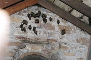 A colony of bats gets cozy in a Lawrence home. In September, the bats were evicted from the property by Critter Control of Kaw Valley, owned by Todd Olson. Bats are an asset in the garden because they gobble up mosquitoes and other pesky insects.