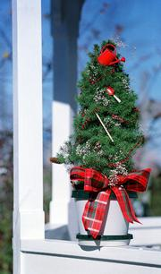 A live potted Christmas tree is a fresh alternative to artificial and cut Christmas trees. Once the holiday is over, they can be transplanted into the yard with relative ease.