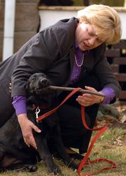 Lawrence resident Margaret Thorp tries to remove a stick from the mouth of a 4-month-old black Labrador retriever named Andromeda. Thorp is training Andromeda to be a guide or service dog.