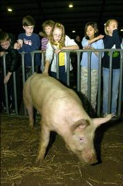 Jenna Von Bargen, 10, of Baldwin, pets a market hog that was among several exhibits at Thursday's Slice of Agriculture.