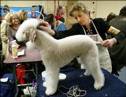 Sandra Bethea, whose family was affected by Hurricane Katrina, grooms her Bedlington terrier backstage Monday, Feb. 13, 2006, at the Westminster Kennel Club Dog Show at Madison Square Garden in New York.