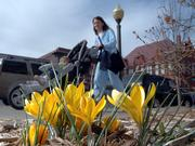 Bright yellow crocuses catch the sun outside the Douglas County Courthouse as Heather Amthauer, Lawrence, pushes her daughter Ava, 2, in a stroller. The two enjoyed the record-warm weather Tuesday, when the temperature climbed to 80. The mild weather has spurred some plants to bloom a bit early, which could cause trouble if freezing temperatures return.