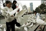 Visitors feed doves at a park Thursday March 9, 2006, in Shanghai, China. A 9-year-old girl has become China's tenth human fatality from the virulent H5N1 strain of bird flu, the government said Wednesday. The girl died Monday in the southeast coastal province of Zhejiang, the Health Ministry said.