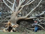 Jackson Rogers, 3, plays in South Park next to a fallen tree that was knocked down in Sunday's storm. Jackson visited the park Tuesday with his mother, Clare Rogers, of Lawrence.