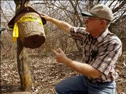 "Glenn Salsbury, of the Department of Agriculture, shows how the bees enter the bottom of the trap where he has hopes of catching ""killer bees""  Thursday, March 30, 2006, at Kingman State Fishing Lake/Wildlife Area near Kingman, Kan. Kansas officials are bracing for the first swarms of so-called ""killer bees"" to cross into the state as early as this year, the Kansas Department of Agriculture said Thursday."