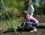 Rebecca McNemee picks up her pet bunny from the vegetable garden while her sister, Renea, stands watch. The McNemee family planted peas, pole beans and lettuce in their garden Wednesday afternoon.