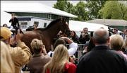 Preakness favorite Barbaro is photographed by members of the media and race fans as he walks to the Stakes Barn at Pimlico Race Course in Baltimore. Barbaro arrived from Fair Hill, Md., Friday for today's Preakness Stakes.