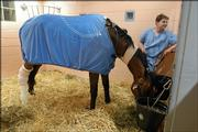In this photo provided by the University of Pennsylvania, veterinary resident Dr. Steven Zedler stands in the stall with Barbaro after the Kentucky Derby winner underwent surgery. Barbaro went under the knife Sunday in Kennett Square, Pa.