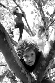 Central Junior High School seventh-grader Charlie Thiel, foreground, poses with two of his fellow classmates for this portrait in a tree at South Park in April. The students are part of Central's after-school photography program, and they tagged along with Journal-World photographers Thad Allender and Mike Yoder last month to learn how to take feature photos for a newspaper.