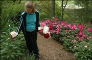 Joan Reiber stops to admire one of the many varieties of peonies that grow in her yard. Although she retired from Hilltop Child Development Center in 1993, Reiber has hardly slowed down. In fact, she personally has installed two sizable water features amid the vast gardens at her Lawrence home.