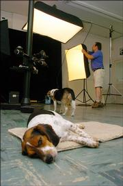 Jon Blumb often works in his Lawrence photography studio with his beagles Bunny, foreground, who's 3 1/2 years old, and Buster, who's 15. Blumb has owned beagles for 24 years.