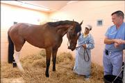 Jockey Edgar Prado greets Barbaro as Dr. Dean Richardson, right, watches at the University of Pennsylvania's New Bolton Center in Kennett Square, Pa. Prado paid his first visit Tuesday to Barbaro since pulling up the colt early in the the Preakness.
