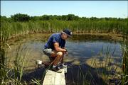Jerry de Noyelles scowers a research pond for Topeka Shiners at the Kansas Aquatic Research Station.  Noyelles, pictured on Wednesday, is deputy director of Kansas Biological Survey and professor in the department of ecology and evolutionary biology.  He is the leading researcher of the Topeka Shiner Behavior Research project.