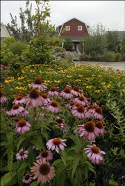 Hutton Farms is one of the recipients of a Commercial Landscape Award from Douglas County Master Gardeners. Purple coneflowers and black-eyed Susans dot the property in northwest Lawrence.
