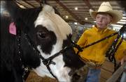 Wyatt Schumann, 12, handles his champion steer in the midst of the award ceremony at the Douglas County 4-H Fairgrounds. Wyatt, who has been active in 4-H for five years, won the distinction of Grand Champion Market Steer Sunday at the Douglas County Fair.