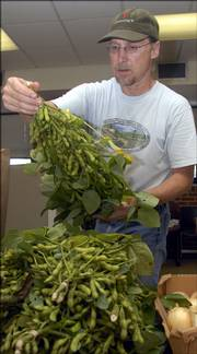Rolling Prairie Farmers Alliance grower Stu Shafer looks over some soybeans, a new but popular offering from the alliance.