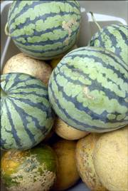 Melons are among one of the seasonal offerings through the Rolling Prairie Farmers Alliance. Subscribers sometimes can choose among which produce they'd like to receive each week, such as carrots instead of beets. Details about signing up and costs are available on the alliance Web site, www.rollingprairie.net.