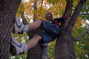 "Dylan Klemmer, 8, Overland Park, climbs up a tree near Kansas University&squot;s Memorial Stadium on Saturday afternoon. ""We have been playing all day. I even played football with a bunch of college kids,"" Dylan said. Leaves in trees all over Lawrence are starting to change color."
