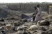 Villagers walk by their livestock killed during a NATO attack in the Panjwayi district of Kandahar province, south Afghanistan. NATO warplanes killed between 30 and 85 civilians, mainly women and children, in Tuesday's attack in southern Afghanistan, Afghan officials and witnesses said Thursday.