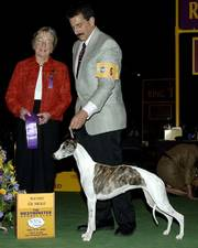 "judge Dorothy Hutchinson, left, and part-owner Paul Lepiane are shown with Champion Bohem C&squot;est La Vie, nicknamed named ""Vivi."" The dog won the Award of Merit at the Westminster Kennel Club dog show Feb. 14, 2006, in New York, but disappeared a day later and has not yet been found."