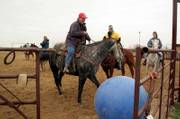 """Christina Lyon, Wellsville, and her horse Thunder score a goal that gets out of hand as the ball breaks through the gate during a recent game of """"horse soccer.""""  Lyon and her fellow riders use the game as a way to socialize their horses and improve newer riders&squot; skills and comfort levels."""