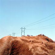 """Cowscape (Power lines)"""