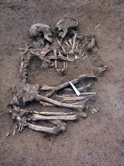 This photo provided by the Archaeological Society SAP in Mantua, northern Italy, shows a pair of human skeletons found Monday at a construction site outside Mantua. Archaeologists unearthed the skeletons, believed to be a man and a woman, from the Neolithic period, buried 5,000 to 6,000 years ago.