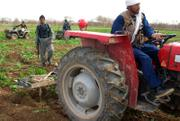 Afghan police officers use tractors to destroy poppy crops Tuesday on a farm in the village of Dobundi, in Afghanistan's Helmand province, during poppy eradication operations.